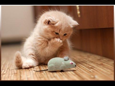 Приколы с животными! Подборка смешного видео с котами!