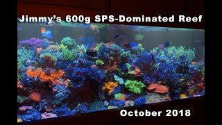 Jimmy's 600g SPS-dominated reef