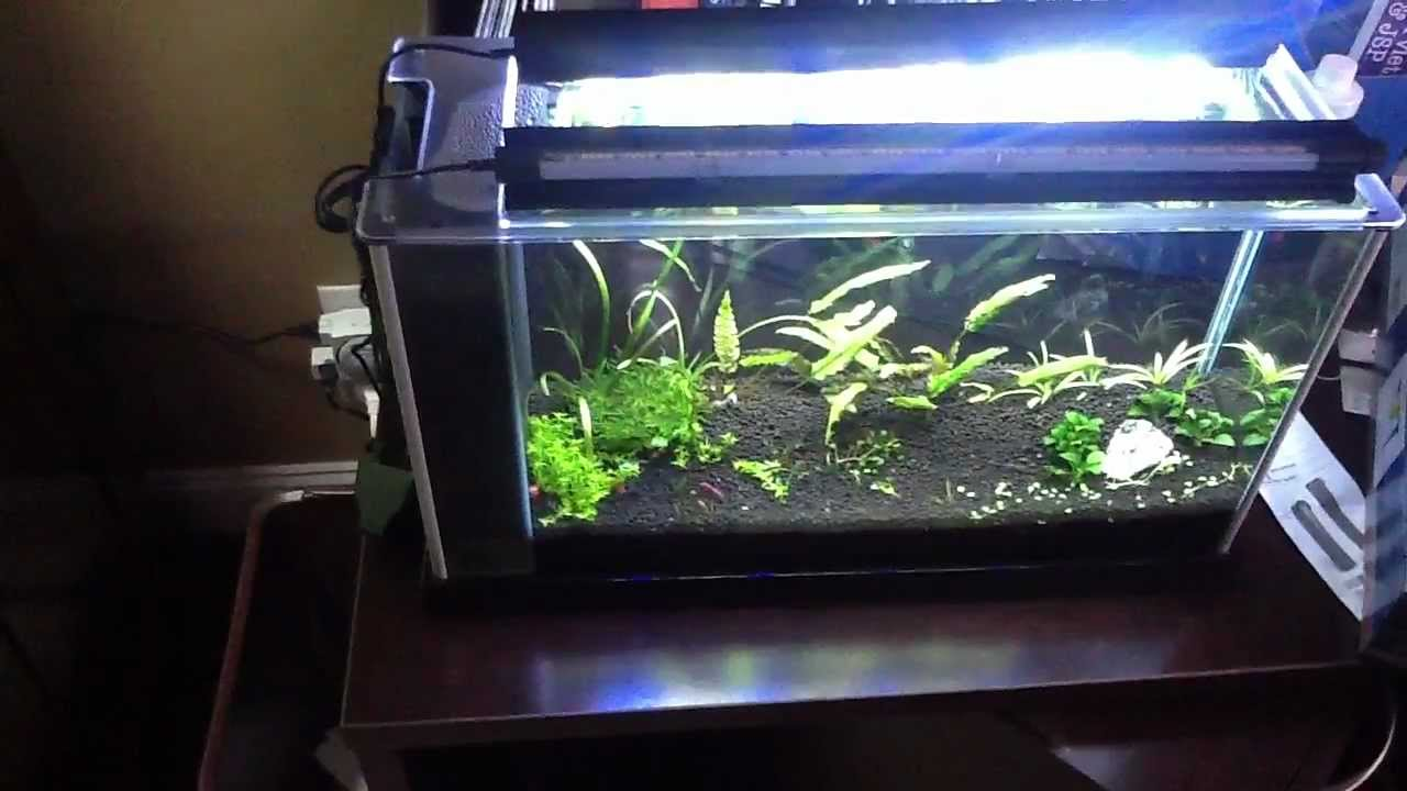 Marineland LED MOD for Fluval Spec V - YouTube