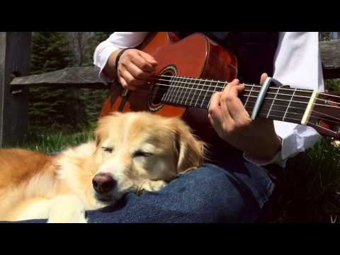 超絶美しいギターの音色で眠る犬