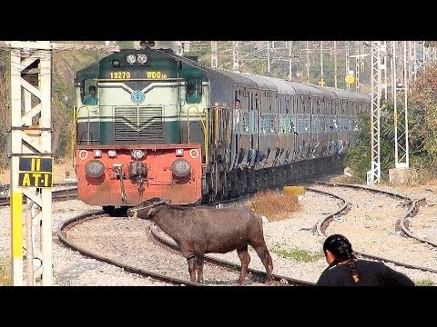 Crazy Buffalo STOPS the Train and escapes : Indian Railways