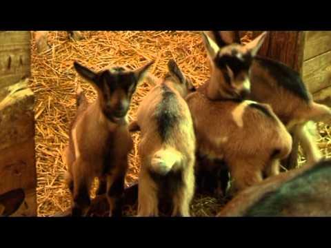 Farma koza od hobija do ozbiljnog posla