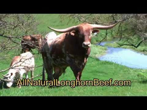 J-bar-H Texas Longhorn Cattle Z Bar H Cattle