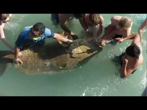 Large Grouper caught at Naples Pier