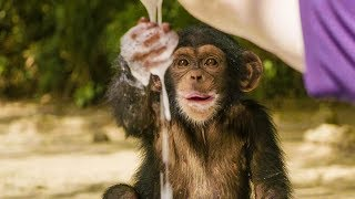 Baby Chimpanzees Playing With Bubbles | BBC Earth