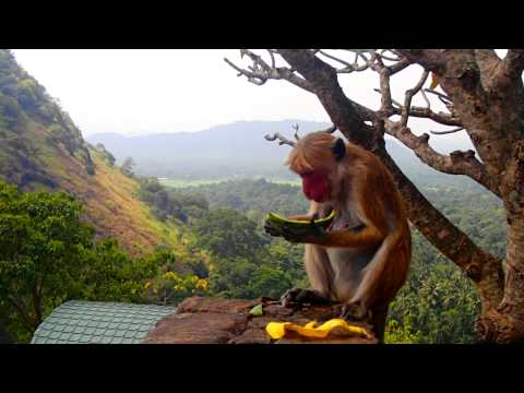 Sri Lanka video