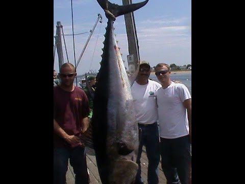 Shark and Tuna Fishing Craig Binette