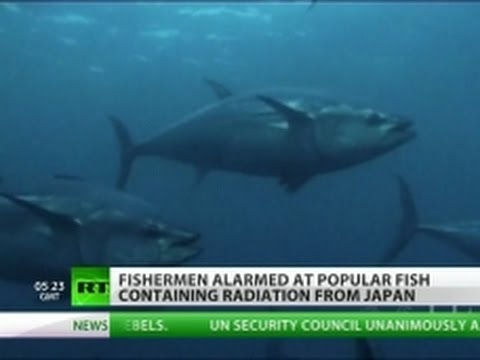 Fishy Catch: Fukushima fins spotted on US shores