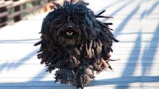 RAREST Dog Breeds In The World!
