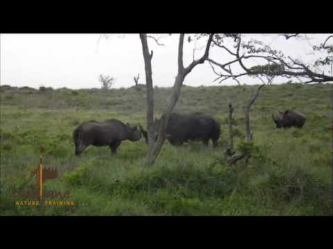 Black Rhino Vs White Rhino Showdown .mov