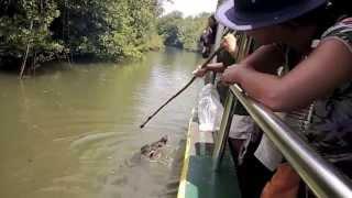Jungle River Cruise, Palau
