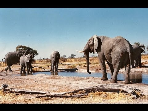 Botswana Self Drive 4x4 Travel Guide.