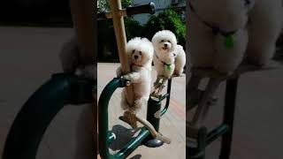 Look at these cute and funny puppies dogs 3711