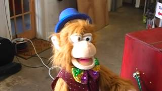 Mr Monkey sings