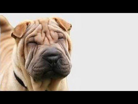Fabulosa mascarilla anti arrugas. Anti wrinkle home remedies. ECODAISY