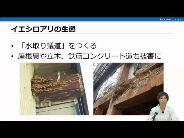 ヤマトシロアリとイエシロアリ 日本の代表的なシロアリの生態