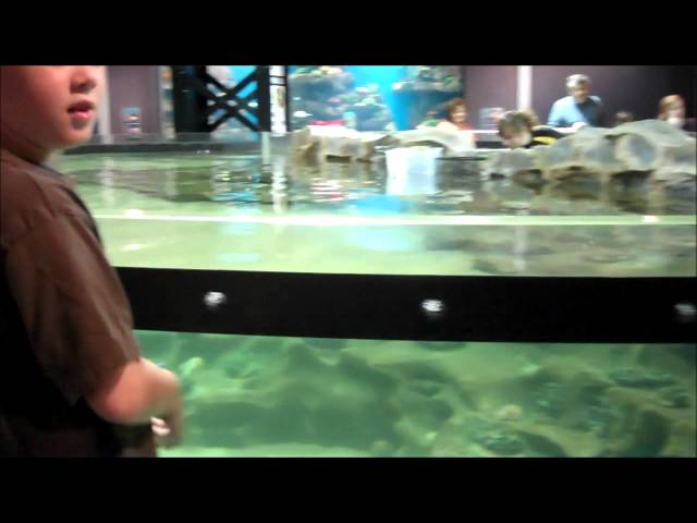 Greater Cleveland Aquarium review -  Ohio Family Fun