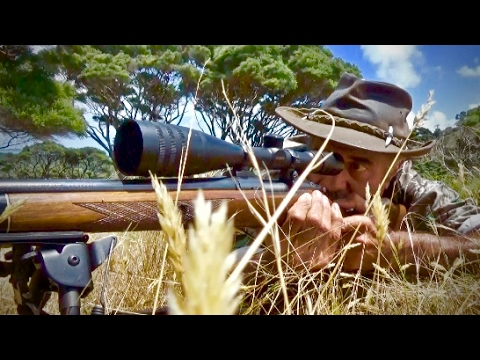 Hunting Red deer in New Zealand part 118