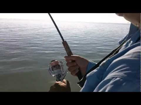 South Padre Island Black Drum Fishing