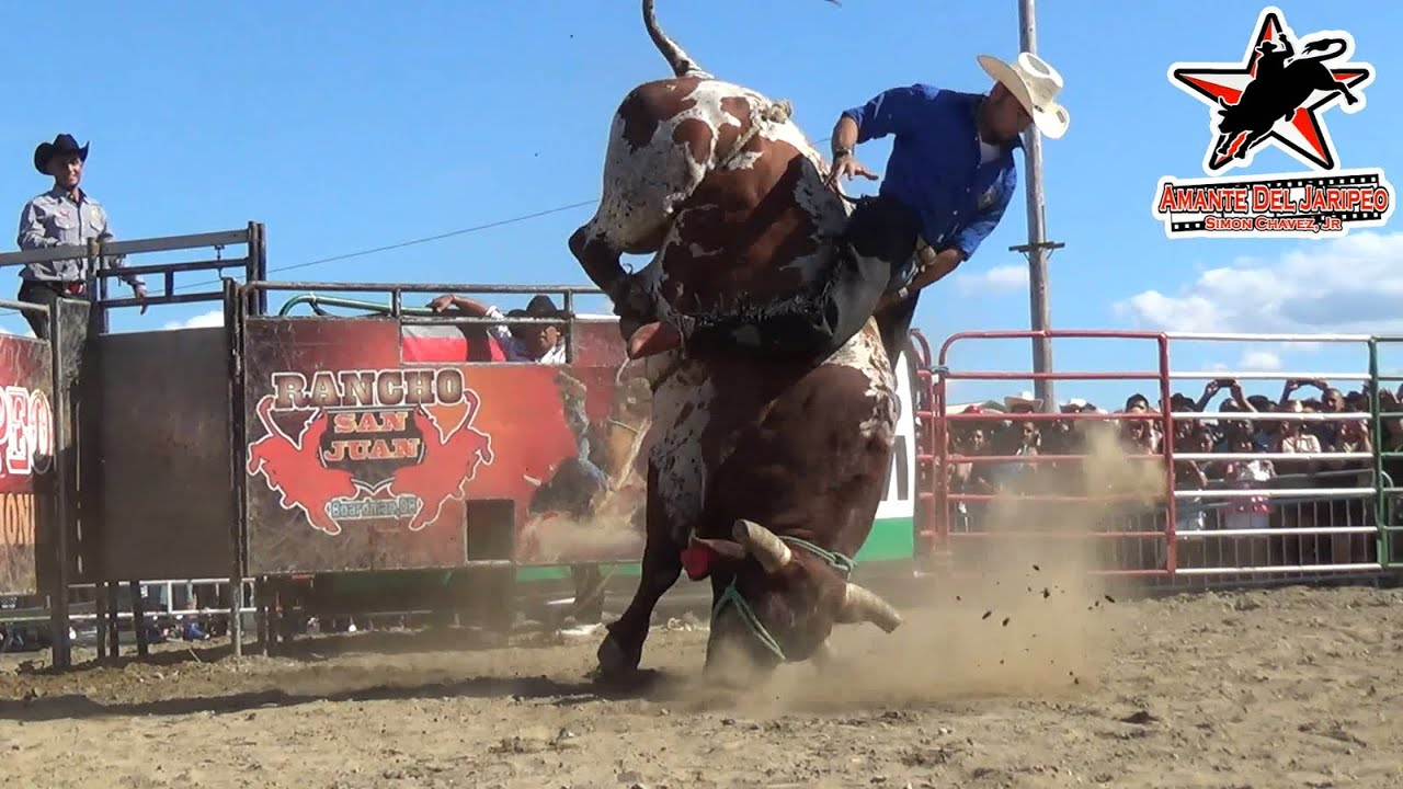 Bill pickett rodeo 2014