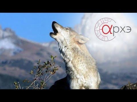 Ясон Бадридзе: Человек в стае волков