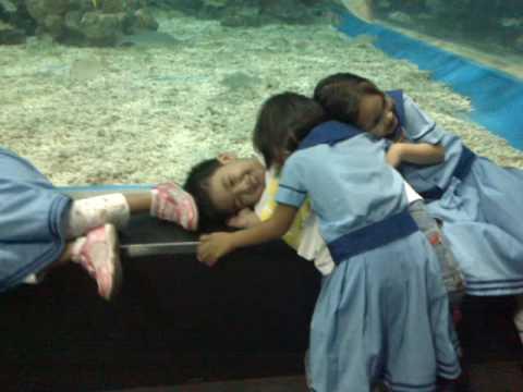 Manila Ocean Park Scandal video