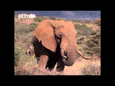 Eco Africa: Kenyans Take Up Arms to Save Wildlife