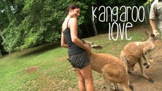 Kangaroo Love Australia