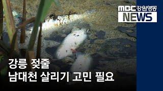 R]강릉 남대천 살리기 고민 필요
