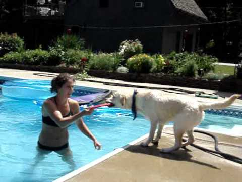 Jack the Labrador Summer 07 Video