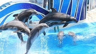 The dolphin circus in Viet Nam
