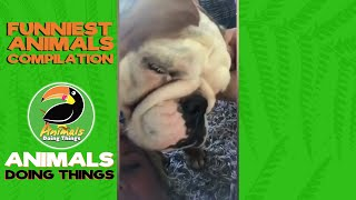 CUTE & FUNNY ANIMALS: Try Not To Laugh! VOL. 15 - FUNNIEST ANIMALS COMPILATION  Animals Doing Things