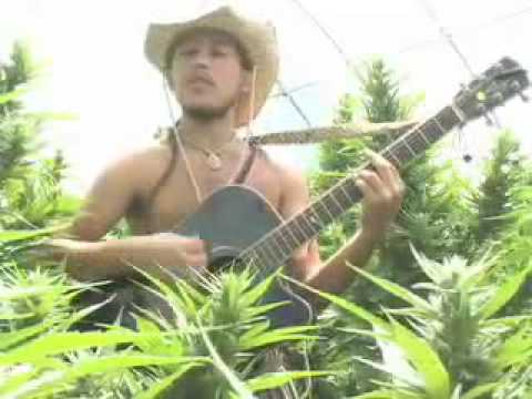 Tree of Life by The Human Revolution - Song about the remarkable Hemp Plant Cannabis sativa