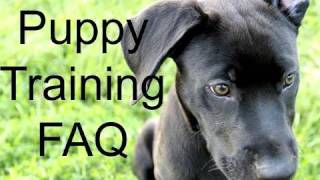 Puppy Training - Viewer Q&A