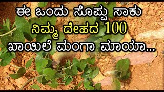 ಈ ಒಂದು ಸೊಪ್ಪು ಸಾಕು ನಿಮ್ಮ ದೇಹದ 100 ಖಾಯಿಲೆ ಮಂಗಾ ಮಾಯಾ...! | Amazing Health Tips |