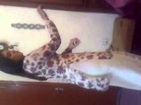Pakistani Hot Girl Frnds Dance Part2 Www.apnawarez video
