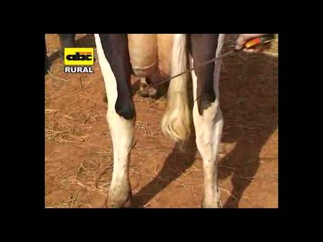 Apareamiento correctivo en vacas lecheras Ing Hugo Pistilli