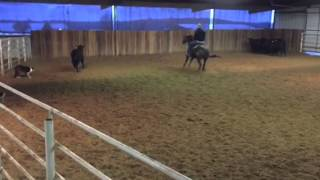 Rudolf- Jared Lesh Cowhorses