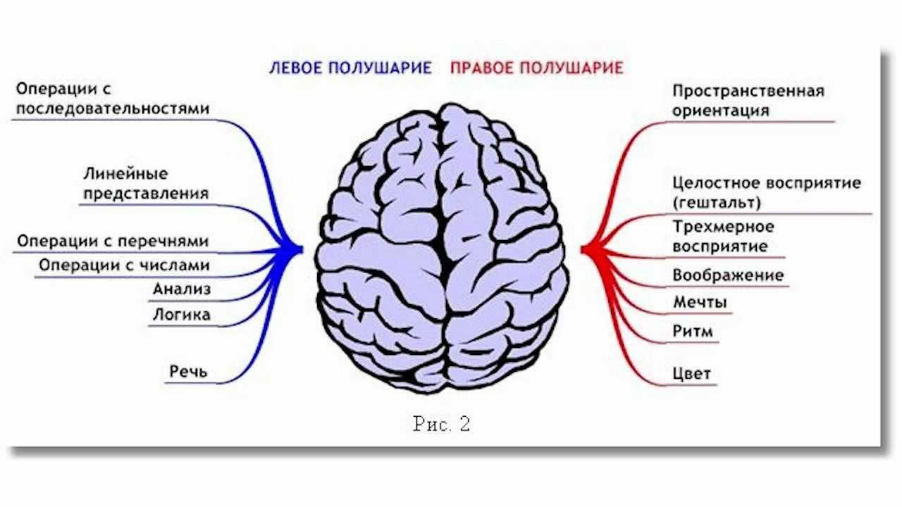 Как сделать что бы работали оба полушария мозга