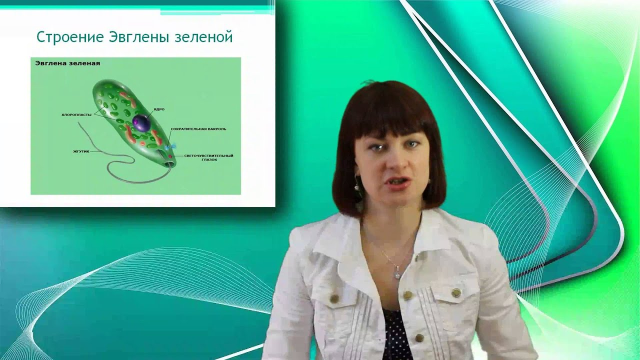 по биологии онлайн: