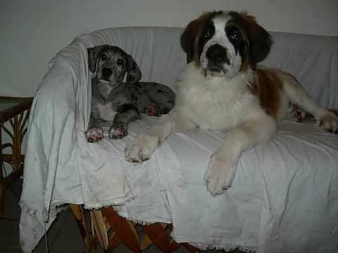 Image Result For Royal Canin Gi