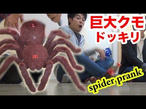 巨大クモドッキリで虫嫌いが絶叫した!! Giant spider prank