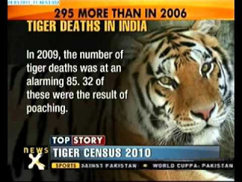 Tiger population in India rises in 2010