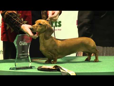 dfs Crufts 2011 Junior Warrant Final winner