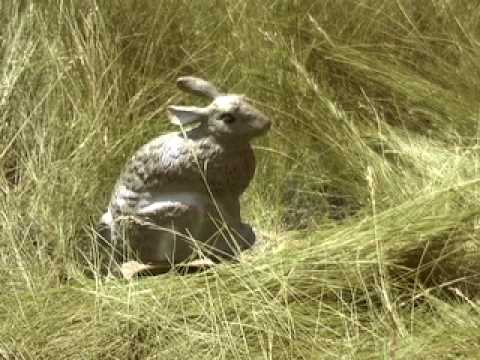 Quiver Rabbit Predator Decoy