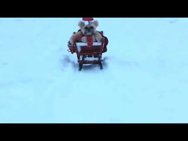 Munchkin the Teddy Bear goes sleighing