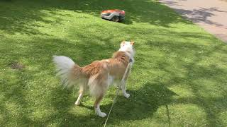 Saron encounters the robot grass cutter!