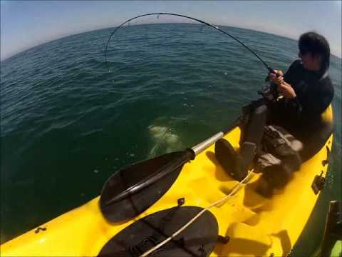 Shark Fishing Off Kayak