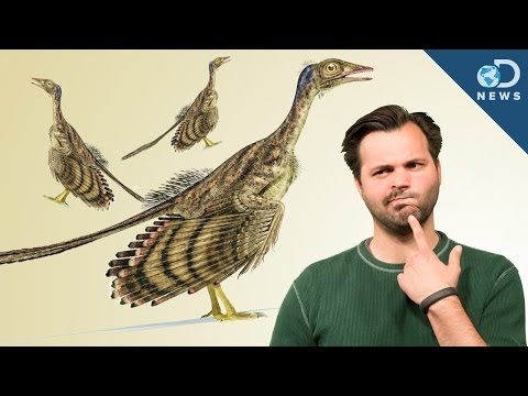 How Did Dinosaurs Evolve Into Birds?