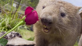 Cutest animal Valentine's Day video ever!!